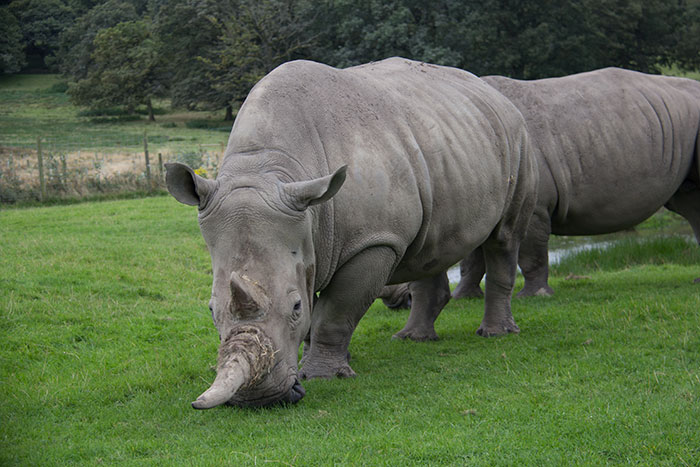 close to a rhino, in the safari park