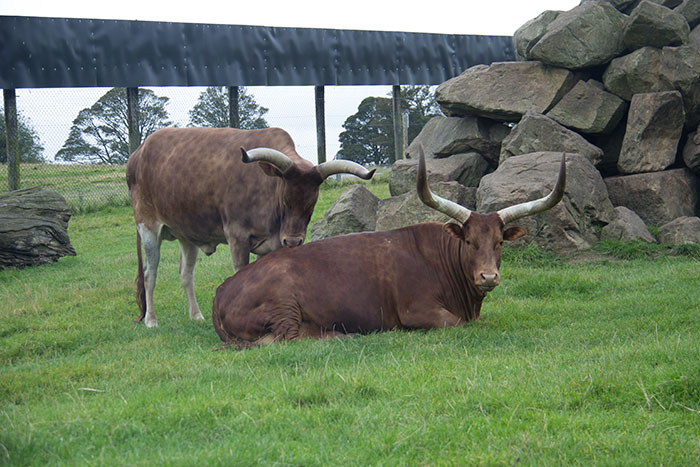 Animals at Knowsley