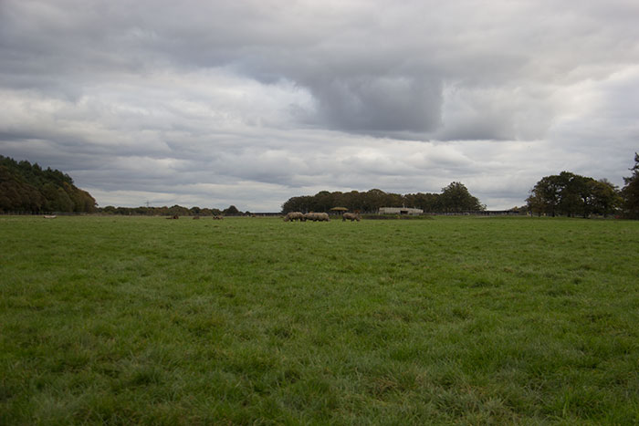 Fields at Knowsley Safari Park - October