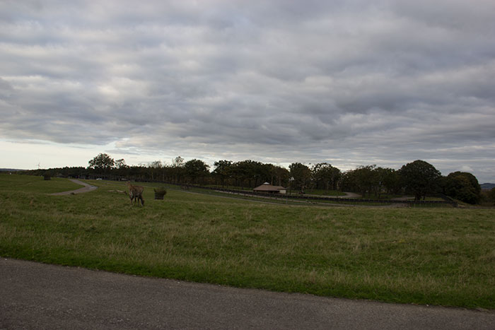 Large field at Knowsley Safari Park - October
