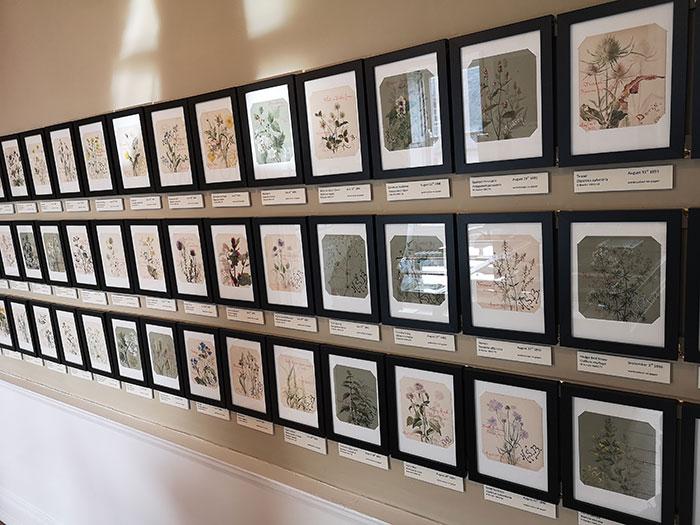 Flower drawings on display