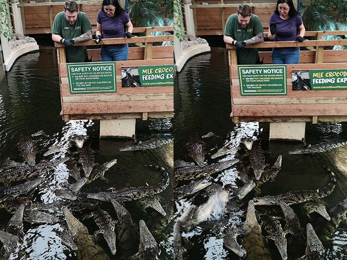 Throwing mice at crocodiles