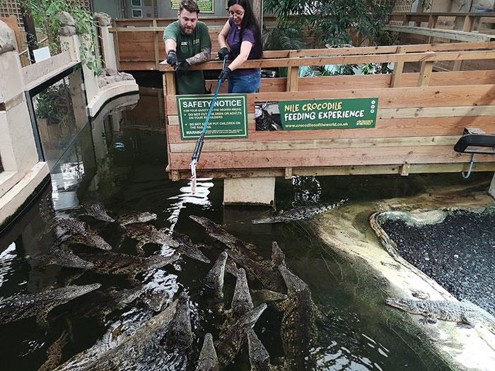 Crocodiles Feeding experience