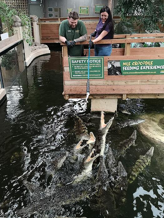 Crocodiles Feeding experience at Crocodiles of the World