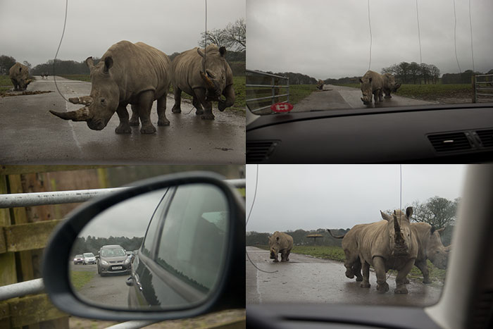 Knowsley Safari Park - Collage with Rhinos