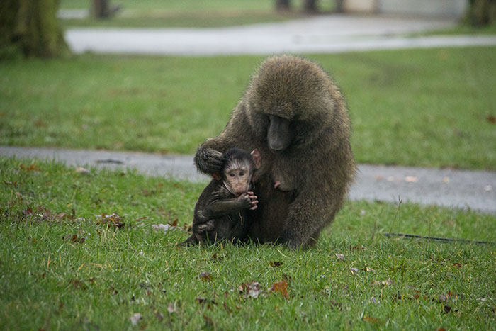 Monkey with baby