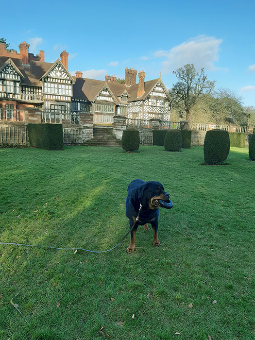 dog at Wightwick Manor
