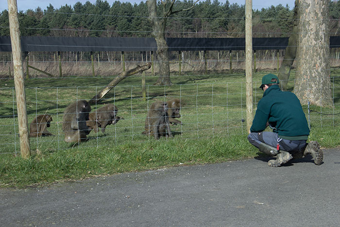 Monkeys with keeper
