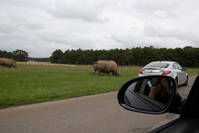 Knowsley Safari Park - Rhinos