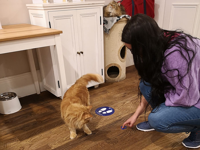 Playing wiht cats at Cat Cafe