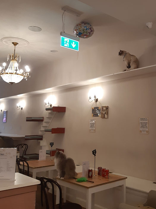 Picture from Cat Cafe Liverpool