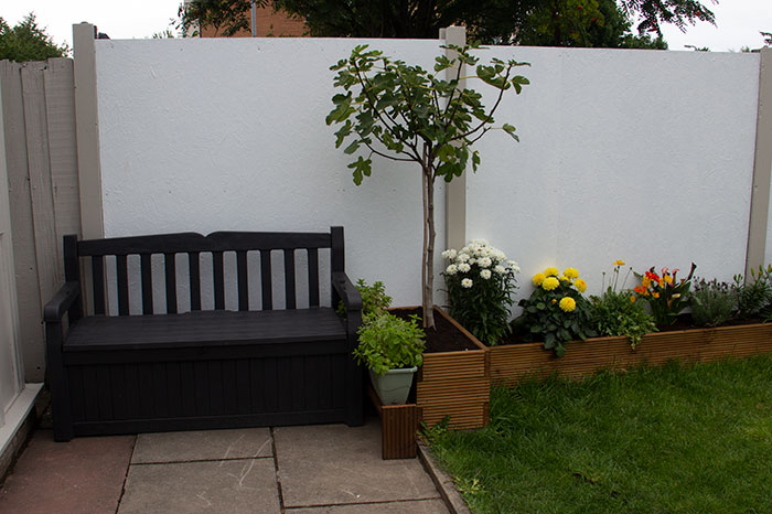 garden bench and fig tree