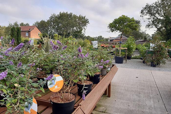Embleys Nurseries - plants