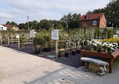 Embleys Nurseries - shrubs