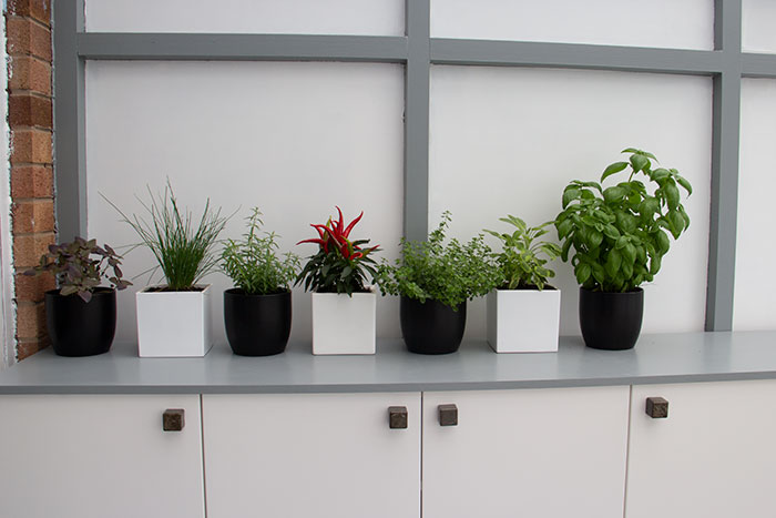 herbs in the Conservatory