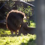 Knowsley Safari Park, October
