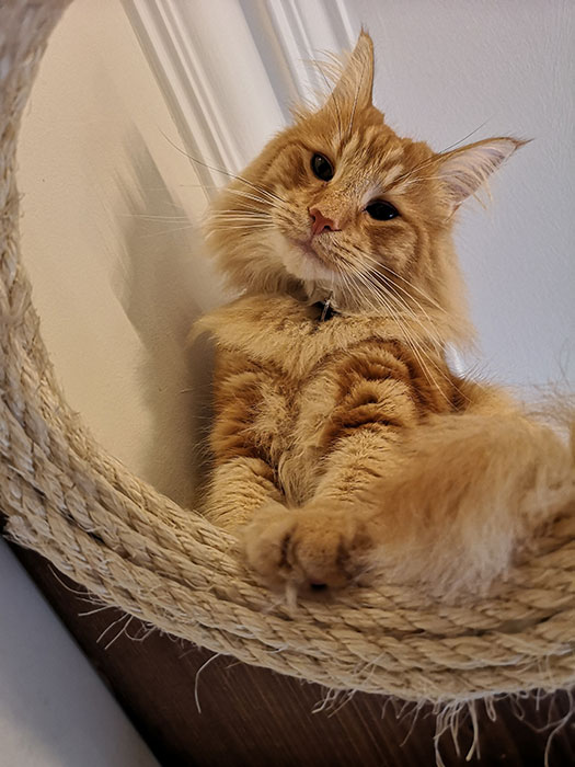 cat at cat cafe