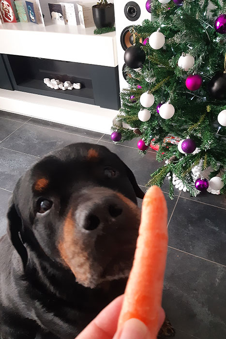 Festus and Rudolph's carrot