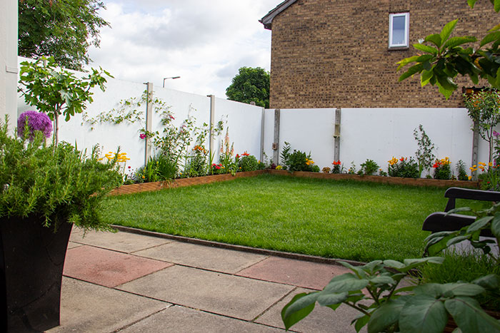My garden in June