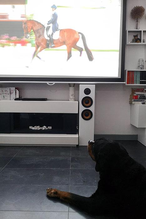 Festus watching dressage