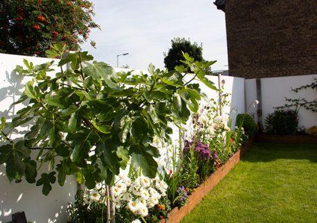My garden in August