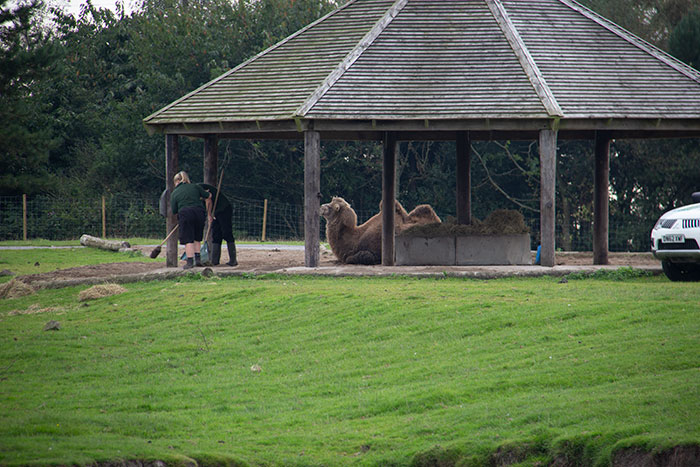Knowsley Safari Park. September 2021