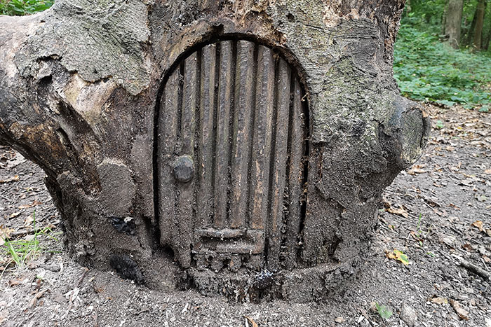 door carved into a tree stump